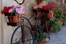 idee in bicicletta (Bicycle)