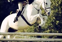 le cheval / by seleta hayes howard