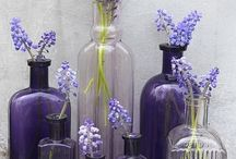 Glass Bottles / by Sherri Port