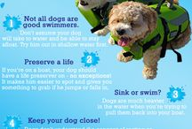 Water Safety Tips For Pets!