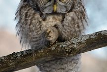 'Smiths Wildlife / Beautiful animals from across Canada
