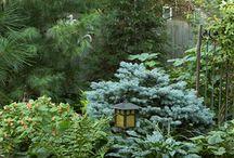 landscaping yard / by Malissa Hargrove Byrd
