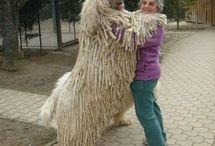 Huge awesome animals