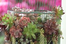 succulents / I love succulents / by Janis Yee