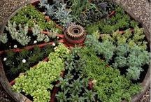 Garden Ideas / Thoughts for the never ending garden project.
