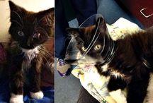 Operation Catnip Success Stories