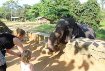 Sri Lanka avec les enfants - Voyage en famille