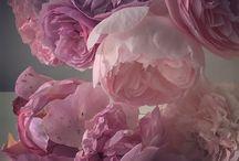 Nick Knight-Language of Flowers
