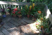 My Gardens / by Carrie Buxbaum