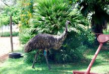 My Book: There's an Emu in my Garden / I'm writing about my adventures with animals. I've been incredibly blessed with encounters, rescued babies and others, and just those at home. I hope you enjoy these stories
