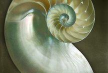 Spirals Spirali