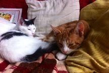 Onze huisdieren. / Dit zijn onze nieuwe huisdieren, 2 katertjes van 4 en 5 maanden oud.
