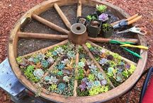 Суккуленты в саду