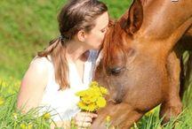 Bodenarbeit Pferde