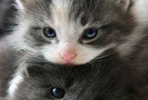 pet love <3