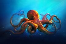ANIMAL • Octopus