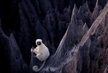 lemurs / by Alex Endsley