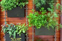 plantas y jardines
