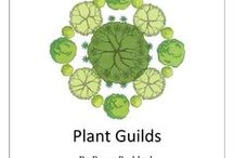 Permaculture plants and plant guilds