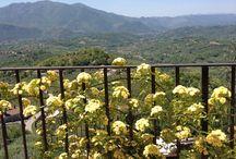 Roselline del nostro giardino / Roselline del nostro giardino con vista Valle