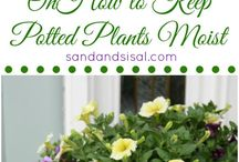 mooi idee vir plante