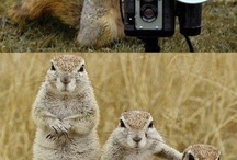 Animals! :)