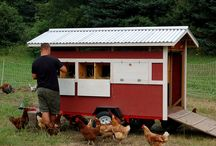 Chicken coop - Τα πάντα για τις κότες / Τα πάντα για τις κότες