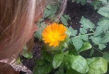 Tuin / Ontwikkelingen in onze achtertuin.