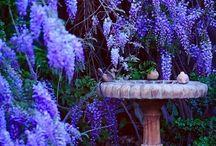 Flowers/Garden / by Laura Kästli
