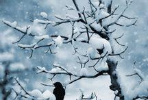 Hiver ≧◠◡◠≦  Winter / La neige ~~ The snow