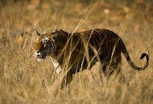 Wildlife in Asia