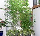 Patios, garden balconies & container gardens