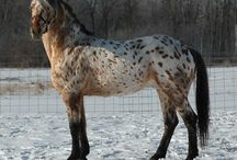 Possible stallions for Emily