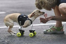 National Specially-Abled Pets Day (May 3rd) / National Specially-abled Pets Day celebrates these amazing and heroic animals.