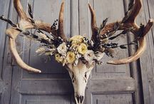Animal Bone Decor