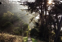 The Presidio / by Golden Gate National Recreation Area