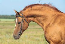 Horse photos by Fefa Koroleva / Photos of horses