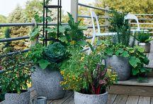 gardening/plants / gardening