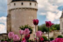 Castles ~ Fairys ~ Dreams