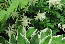 Que planter à l'ombre ? - What to plant in the shade / Association de plantes pour l'ombre fraiche