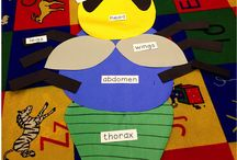 insects- preschool
