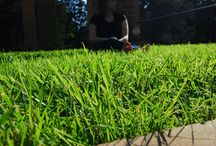 Great Grass Photos / There's nothing like a living lawn to soothe the senses and enhance the landscape!