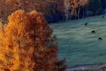 """Autumn """"Podzim"""""""