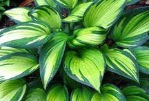 GARDEN: plant names