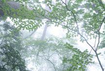 PHOTO ( Trees ) / Fotografía