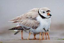 PASARI / BIRDS