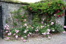 wall in garden