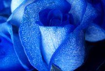 Blue is my favourite colour