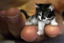 Tiny animals / So tiny and cute!