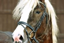 Konie  / Głównie konie.
